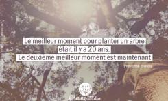 Le meilleur moment pour planter un arbre....