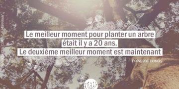 Le meilleur moment pour planter un arbre était il y a 20 ans. Le deuxième meilleur moment est maintenant.