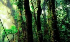 Méditation pour se relier à la Terre