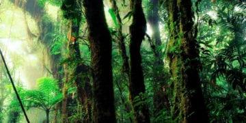 Graine d'Eden bien-être Méditation pour se relier à la Terre