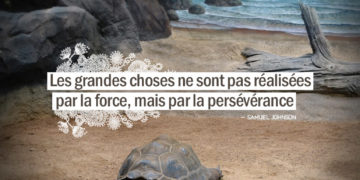 Les grandes choses ne sont pas réalisées par la force, mais par la persévérance. SAMUEL JOHNSON - Graine d'Eden citation