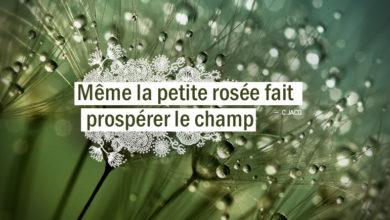 Même la petite rosée fait prospérer le champ. Christian Jacq citation - Graine d'Eden citation