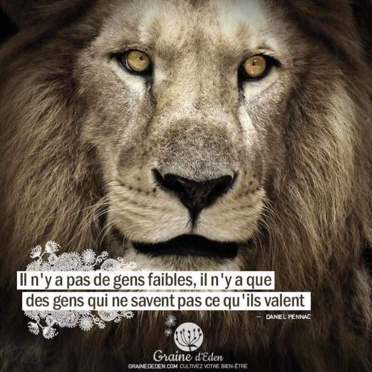 Il n'y a pas de gens faibles, il n'y a que des gens qui ne savent pas ce qu'ils valent. DANIEL PENNAC - Graine d'Eden citation
