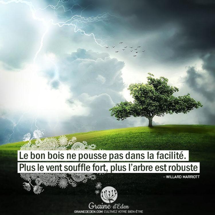 Le bon bois ne pousse pas dans la facilité. Plus le vent souffle, plus l'arbre est robuste. WILLARD MARRIOTT - Graine d'Eden Citation