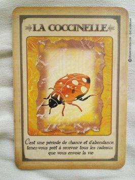 Messages de votre animal totem - Graine d'Eden review et présentation de cartes oracle divinatoire, de tarot divinatoire.