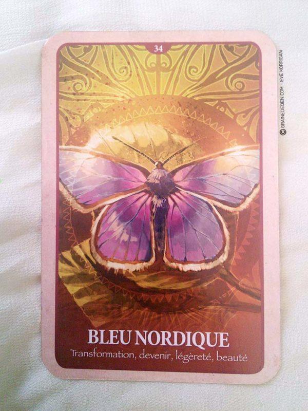 Les cartes Oracle le langage secret des animaux de Chip Richards - Graine d'Eden review et présentation de cartes oracle divinatoire, de tarot divinatoire.