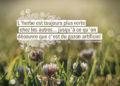 L'herbe est toujours plus verte chez les autres... jusqu'à ce qu'on découvre que c'est du gazon artificiel. JACQUES SALOME - Graine d'Eden Citation