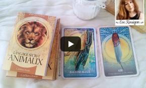 Vidéo Review Les cartes Le langage secret des Animaux