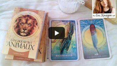 Vidéo review Les Cartes Le Langage Secret des Animaux - Graine d'Eden présentation de tarot divinatoire oracle divinatoire.