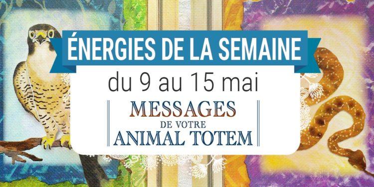 9 au 15 mai - Votre énergie de la semaine avec les cartes Messages de votre Animal Totem de Steven D. Farmer - Quelle sera votre énergie cette semaine - Graine d'Eden tarot et oracle divinatoires