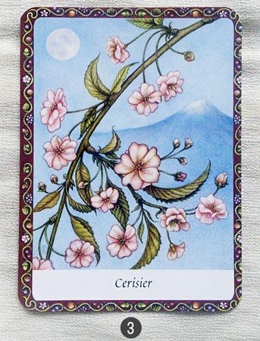 22 au 28 aout - Votre guidance de la semaine Les cartes de l'Oracle des Arbres de Jane Struthers - Graine d'Eden Tarots et Oracles divinatoires
