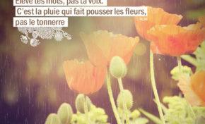 Élève tes mots, pas ta voix. C'est la pluie qui fait pousser les fleurs ...