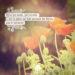 Élève tes mots, pas ta voix. C'est la pluie qui fait pousser les fleurs, pas le tonnerre. RUMI - Graine d'Eden Citation