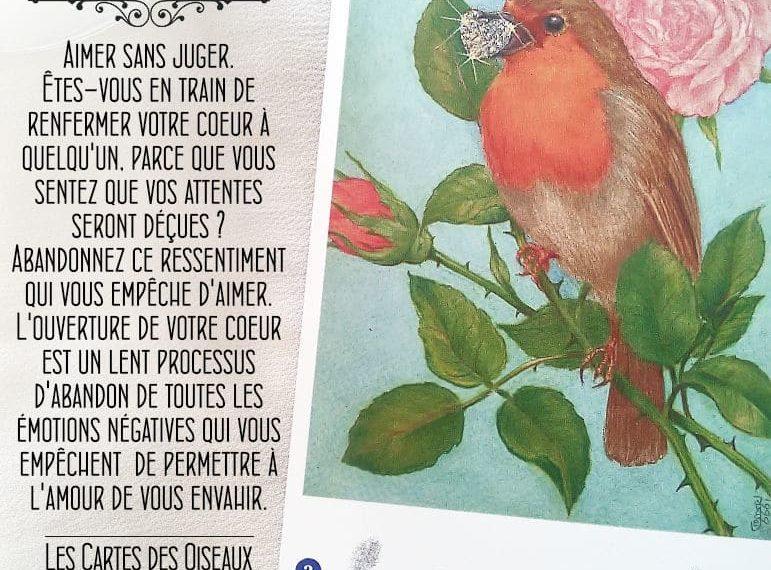 Les Cartes des Oiseaux - Carte Le Rouge-Gorge - Amour Divin - Graine d'Eden Développement personnel, spiritualité, tarots et oracles divinatoires, Bibliothèques des Oracles, avis, présentation, review