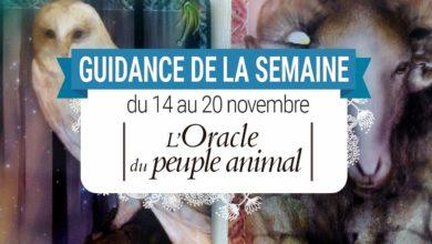 14 au 20 novembre - Votre guidance de la semaine avec l'Oracle du peuple animal de Arnaud Riou - Graine d'Eden Tarots et Oracles divinatoires - avis, review, présentations