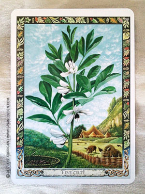 L'Oracle Druidique des Plantes de Philip et Stephanie Carr-Gomm - Graine d'Eden Développement personnel, spiritualité, tarots et oracles divinatoires, Bibliothèques des Oracles, avis, présentation, review