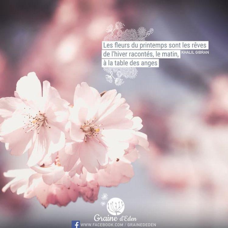 Les fleurs du printemps sont les rêves de l'hiver racontés, le matin, à la table des anges. - Khalil Gibran - Graine d'Eden Citation