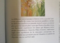 L'Oracle de l'Amour de Monique Grande et Ines Honfi Review - Graine d'Eden Développement personnel, spiritualité, tarots et oracles divinatoires, Bibliothèques des Oracles, avis, présentation, review tarot oracle , revue tarot oracle