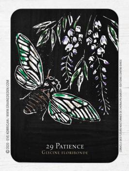 L'Oracle des Fleurs Nocturnes de Cheralyn Darcey